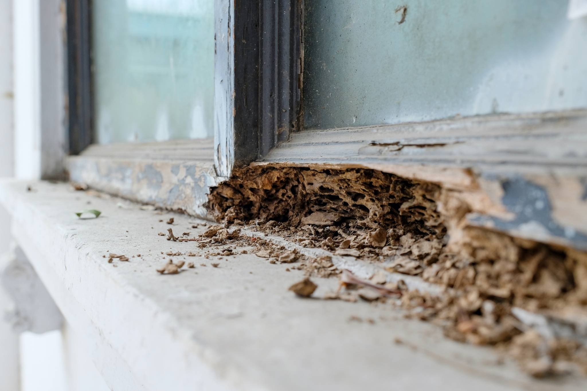I Found Termites in my Home. What do I do?